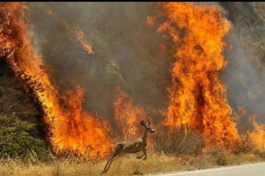 خاییز در آتش نداشته ها سوخت / کاش پرنده ها رفته باشند